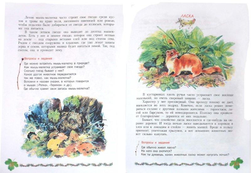 Иллюстрация 1 из 40 для Кто в кустарнике живет?: книга для чтения детям - Александр Тамбиев | Лабиринт - книги. Источник: Лабиринт