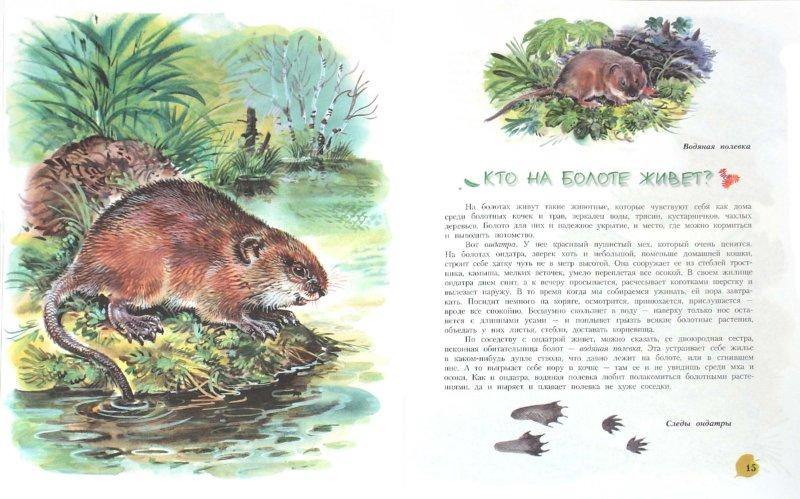 Иллюстрация 1 из 42 для Кто на болоте живет? Книга для чтения детям - Александр Тамбиев   Лабиринт - книги. Источник: Лабиринт