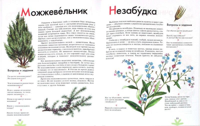 Иллюстрация 1 из 17 для Азбука. Растения России: книга для чтения детям - Инна Шустова | Лабиринт - книги. Источник: Лабиринт