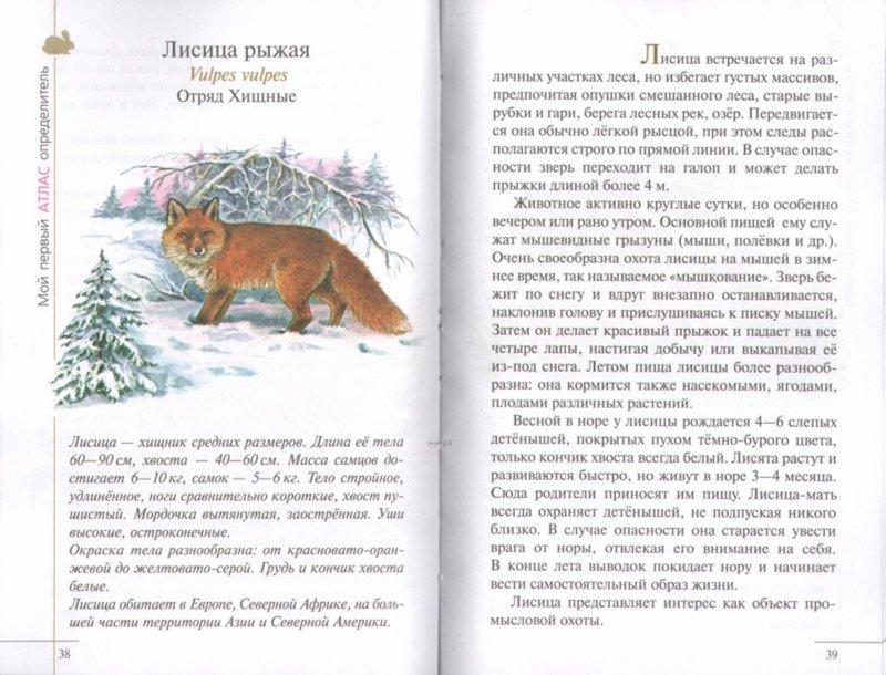 Иллюстрация 1 из 30 для Атлас. Животные леса (3582) - Бровкина, Сивоглазов   Лабиринт - книги. Источник: Лабиринт