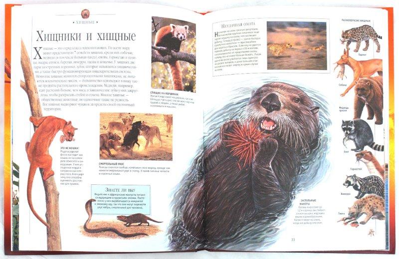 Иллюстрация 1 из 33 для Млекопитающие. Иллюстрированная энциклопедия | Лабиринт - книги. Источник: Лабиринт