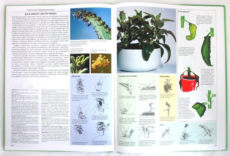 Иллюстрация 1 из 20 для Энциклопедия комнатных растений - Ярослав Рак | Лабиринт - книги. Источник: Лабиринт