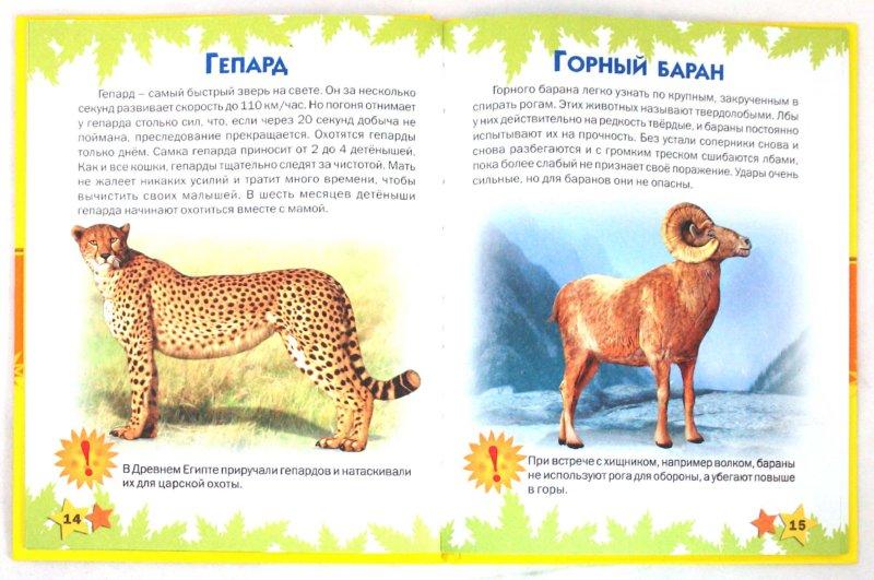 Иллюстрация 1 из 52 для Атлас животных для малышей - Татьяна Комзалова | Лабиринт - книги. Источник: Лабиринт