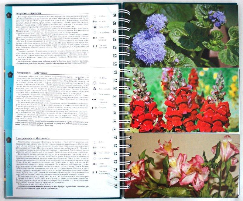 Иллюстрация 1 из 19 для Миллион цветов на вашем участке - Князева, Князева   Лабиринт - книги. Источник: Лабиринт