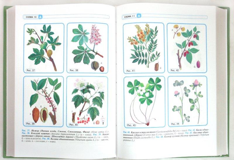 Иллюстрация 1 из 5 для Травник. Энциклопедия лекарственных растений | Лабиринт - книги. Источник: Лабиринт