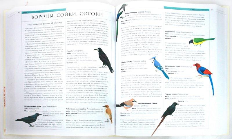 Иллюстрация 1 из 43 для Новейшая энциклопедия животных | Лабиринт - книги. Источник: Лабиринт