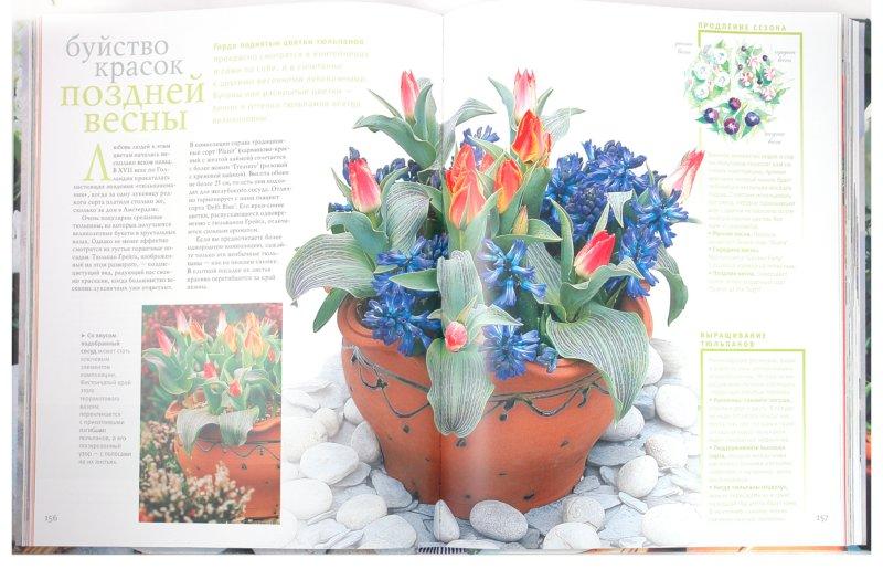 Иллюстрация 1 из 10 для Контейнерное садоводство - Дэй, Ледуорд, Лав, Сигал, Уилсон | Лабиринт - книги. Источник: Лабиринт