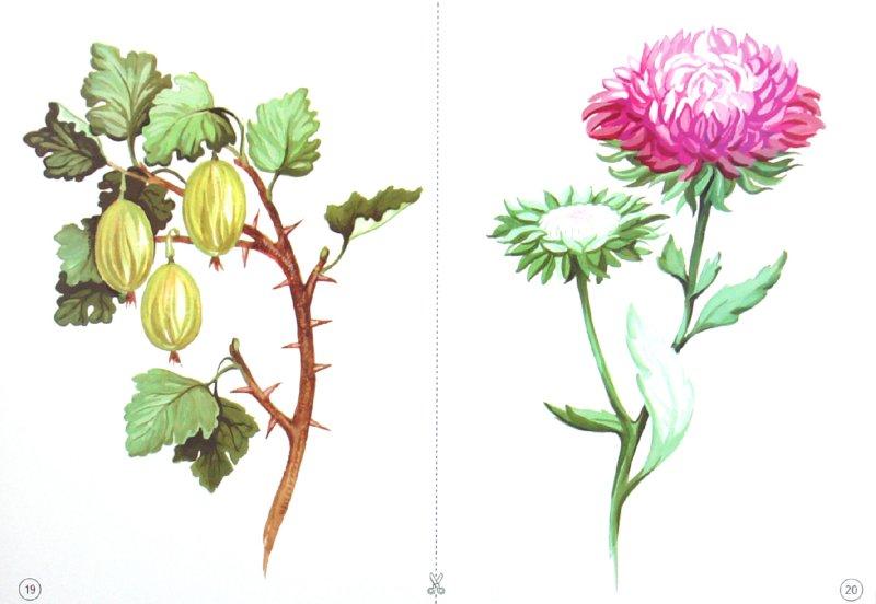 Иллюстрация 1 из 13 для Демонстрационный материал: Деревья, кусты, грибы | Лабиринт - книги. Источник: Лабиринт