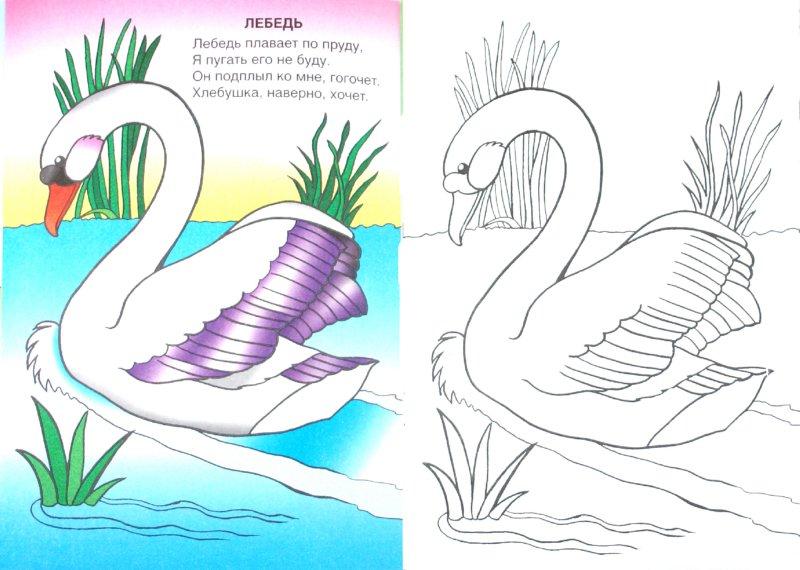 Иллюстрация 1 из 14 для Крылатые соседи - Т. Коваль | Лабиринт - книги. Источник: Лабиринт