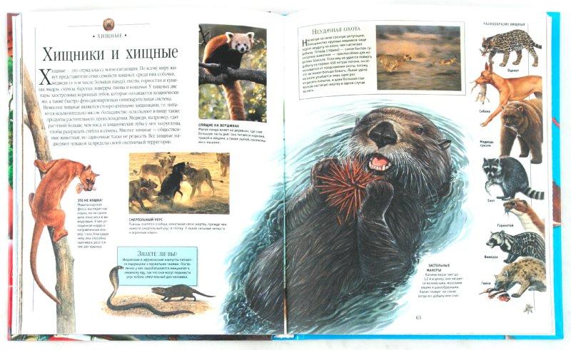 Иллюстрация 1 из 25 для Моя самая первая энциклопедия | Лабиринт - книги. Источник: Лабиринт