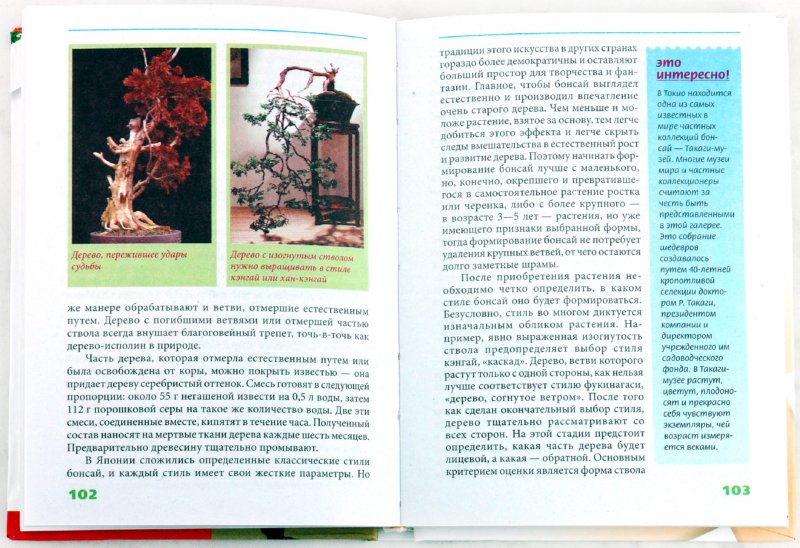 Иллюстрация 1 из 3 для Бонсай - Мария Згурская | Лабиринт - книги. Источник: Лабиринт