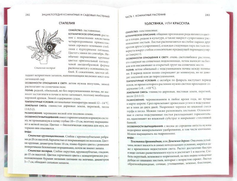 Иллюстрация 1 из 31 для Энциклопедия комнатных и садовых растений | Лабиринт - книги. Источник: Лабиринт