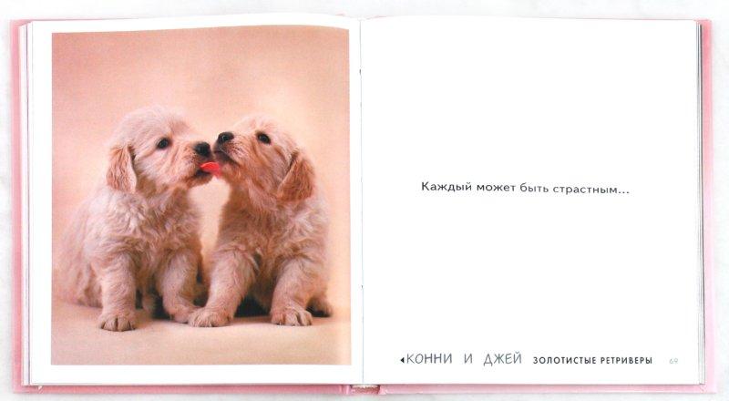 Иллюстрация 1 из 48 для Щенячий восторг, или Путеводитель по миру любви - Рейчел Хэйл | Лабиринт - книги. Источник: Лабиринт