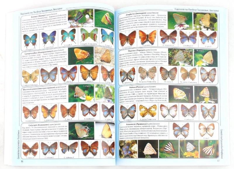 Иллюстрация 1 из 7 для Энциклопедия дневных бабочек мира   Лабиринт - книги. Источник: Лабиринт