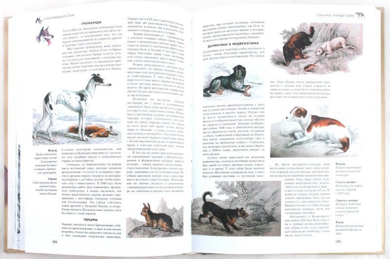 Иллюстрация 1 из 4 для Собаки: самая полная иллюстрированная энциклопедия - Джульетт Канлифф | Лабиринт - книги. Источник: Лабиринт