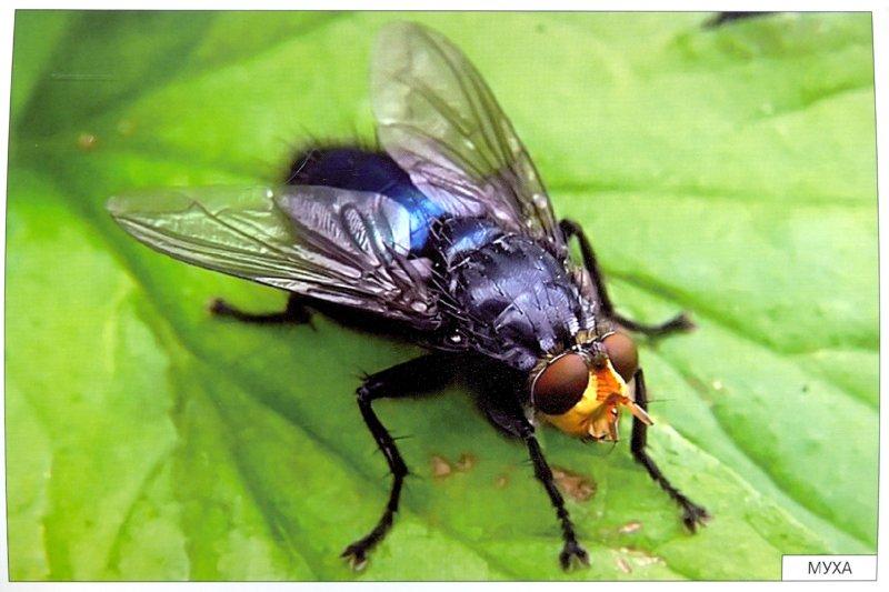 Иллюстрация 1 из 27 для Расскажите детям о насекомых - Э. Емельянова | Лабиринт - книги. Источник: Лабиринт