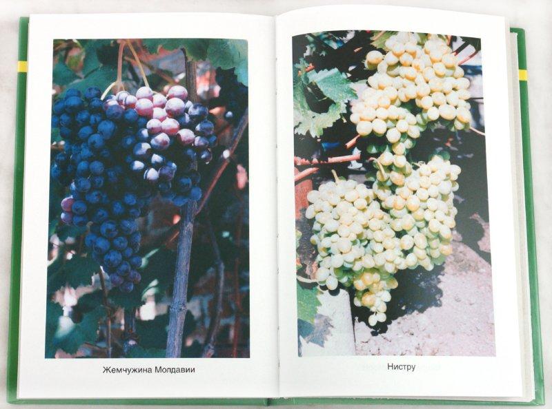Иллюстрация 1 из 6 для Энциклопедия виноградаря - Темный, Темная | Лабиринт - книги. Источник: Лабиринт