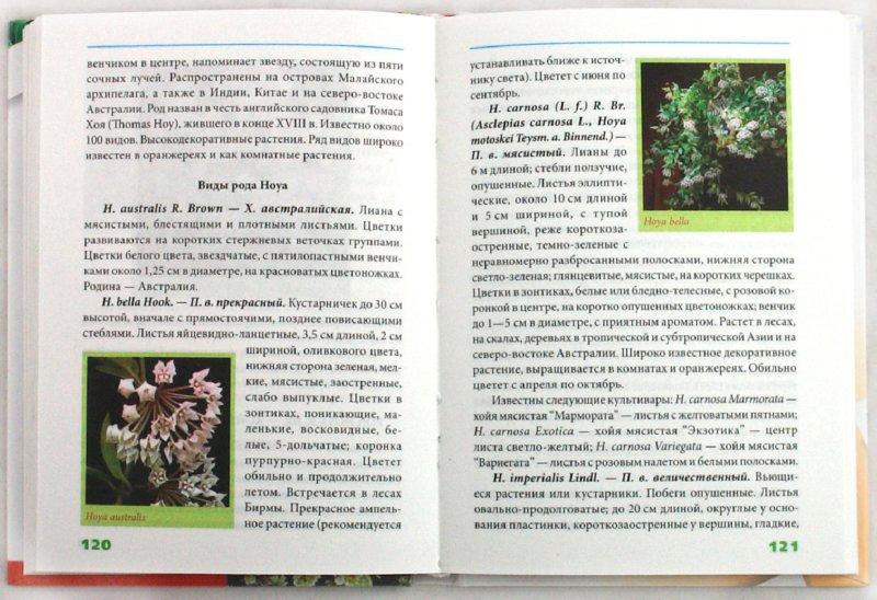 Иллюстрация 1 из 8 для Суккуленты - Татьяна Дорошенко | Лабиринт - книги. Источник: Лабиринт