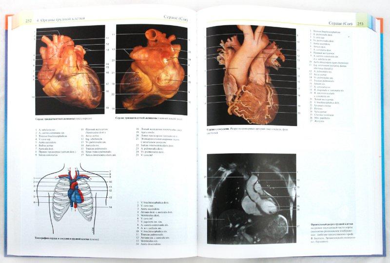 Иллюстрация 1 из 23 для Иллюстрированный атлас. Анатомия - Роен, Йокочи, Лютьен-Дреколл | Лабиринт - книги. Источник: Лабиринт