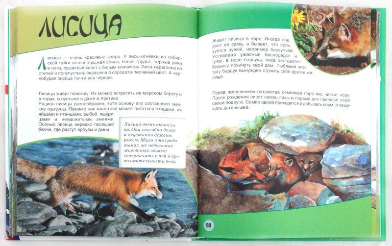 Иллюстрация 1 из 8 для Животные - Игорь Павлинов | Лабиринт - книги. Источник: Лабиринт