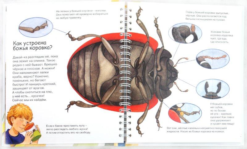 Иллюстрация 1 из 14 для Божья коровка - Андреа Эрне   Лабиринт - книги. Источник: Лабиринт