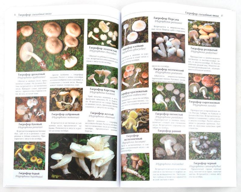 Иллюстрация 1 из 21 для Все о съедобных грибах | Лабиринт - книги. Источник: Лабиринт