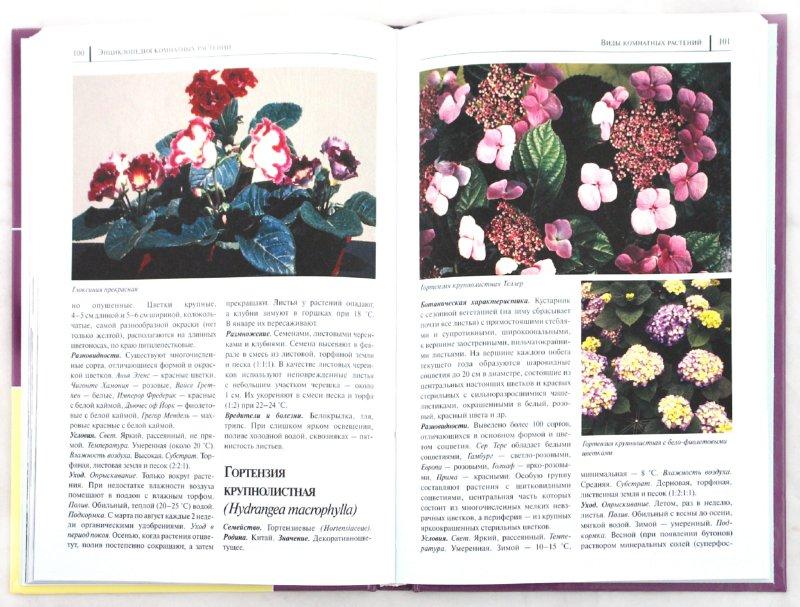 Иллюстрация 1 из 50 для Энциклопедия комнатных растений - Рак, Степура, Степура   Лабиринт - книги. Источник: Лабиринт