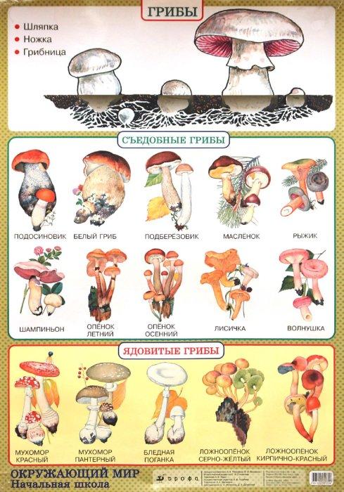 Иллюстрация 1 из 2 для Окружающий мир. Грибы. Природные зоны. Пустыня - Плешаков, Яременко | Лабиринт - книги. Источник: Лабиринт
