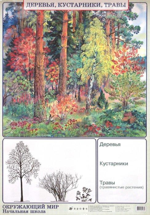 Иллюстрация 1 из 2 для Окружающий мир. Деревья, кустарники, травы. Природные зоны. Лесная зона (тайга) - Плешаков, Яременко | Лабиринт - книги. Источник: Лабиринт