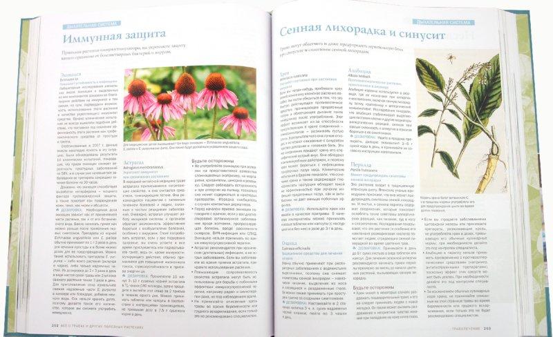 Иллюстрация 1 из 16 для Все о травах и других полезных растениях - Аллардайс, Баррет, Биткон | Лабиринт - книги. Источник: Лабиринт