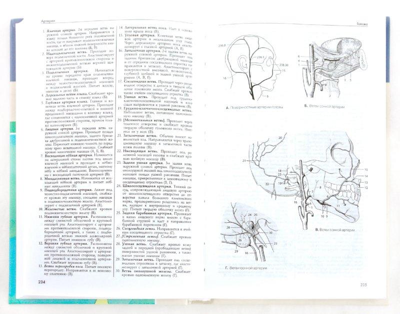 Иллюстрация 1 из 11 для Карманный атлас анатомии человека - Фениш, Даубер   Лабиринт - книги. Источник: Лабиринт