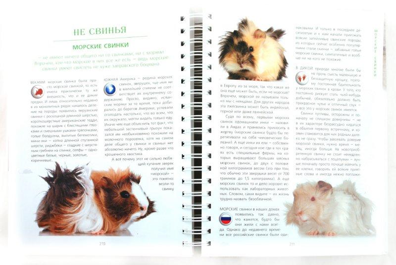 Иллюстрация 1 из 27 для От мышки до кошки - Ольга Волкова | Лабиринт - книги. Источник: Лабиринт