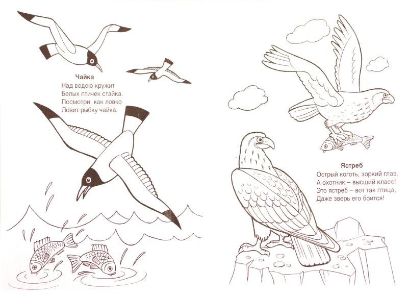 Иллюстрация 1 из 13 для Кто летает в небе? - Т. Коваль   Лабиринт - книги. Источник: Лабиринт