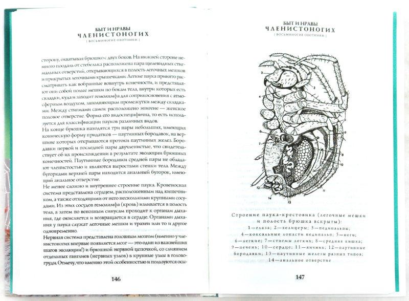 Иллюстрация 1 из 33 для Быт и нравы членистоногих - В. Ползиков | Лабиринт - книги. Источник: Лабиринт