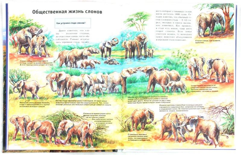 Иллюстрация 1 из 19 для Слоны - Ульрих Зедлаг | Лабиринт - книги. Источник: Лабиринт