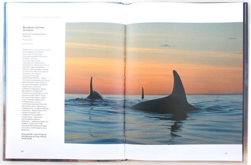 Иллюстрация 1 из 14 для Дикая природа. Фотографии, покорившие мир | Лабиринт - книги. Источник: Лабиринт