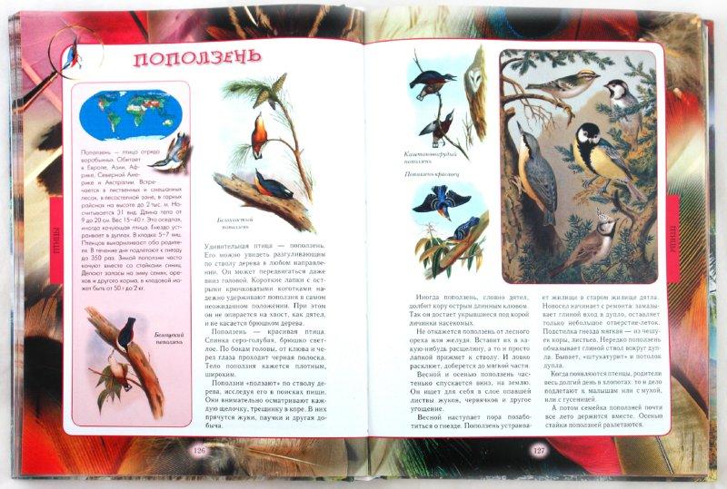 Иллюстрация 1 из 54 для Животный мир нашей планеты - Алексей Клиентов | Лабиринт - книги. Источник: Лабиринт