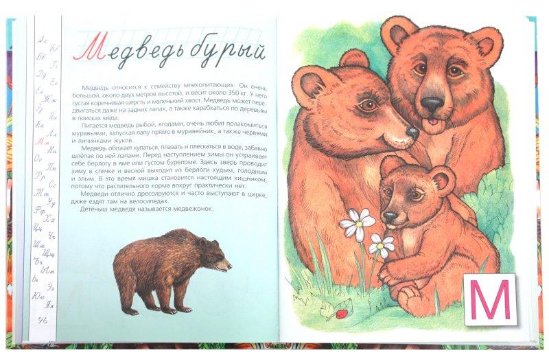 Иллюстрация 1 из 15 для Азбука животного мира - Галина Шалаева | Лабиринт - книги. Источник: Лабиринт