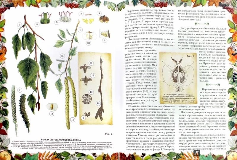 Иллюстрация 1 из 28 для Беседы о русском лесе - Дмитрий Кайгородов | Лабиринт - книги. Источник: Лабиринт