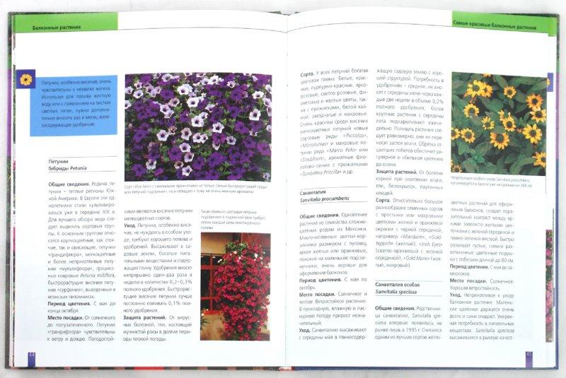 Иллюстрация 1 из 12 для Балконные растения. Выбор. Оформление. Уход - Ева-Мария Гайгер   Лабиринт - книги. Источник: Лабиринт