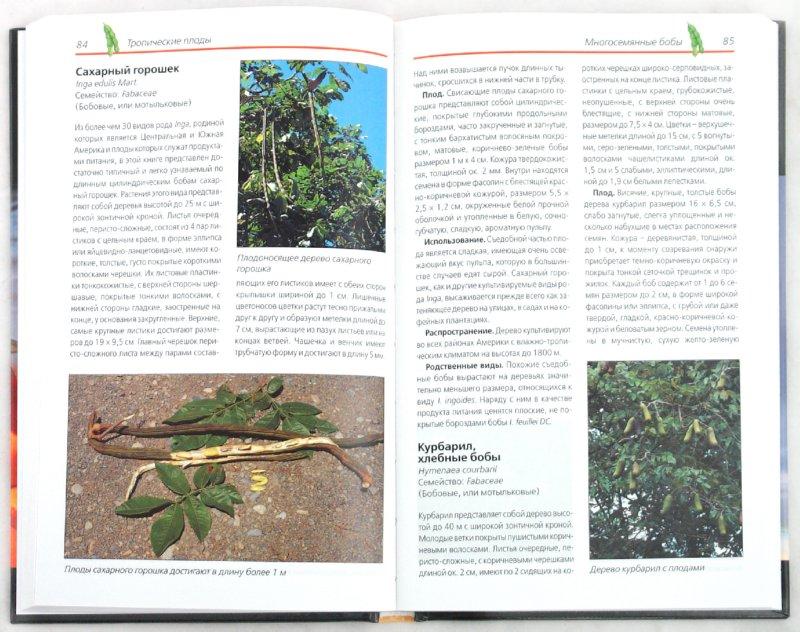 Иллюстрация 1 из 31 для Тропические плоды. Биология, применение, выращивание и сбор урожая - Новак, Шульц | Лабиринт - книги. Источник: Лабиринт