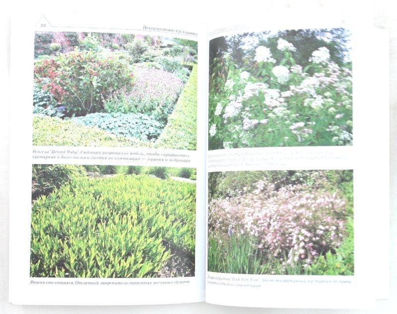 Иллюстрация 1 из 10 для Справочник ландшафтного дизайнера по выбору растений - Черняева, Карписонова, Черняева | Лабиринт - книги. Источник: Лабиринт