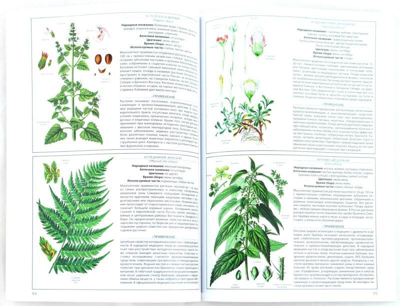 Иллюстрация 1 из 6 для Энциклопедия лекарственных трав | Лабиринт - книги. Источник: Лабиринт