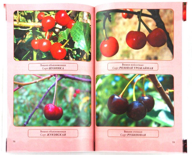 Иллюстрация 1 из 13 для Вишня и черешня - Криворучко, Горбунов | Лабиринт - книги. Источник: Лабиринт