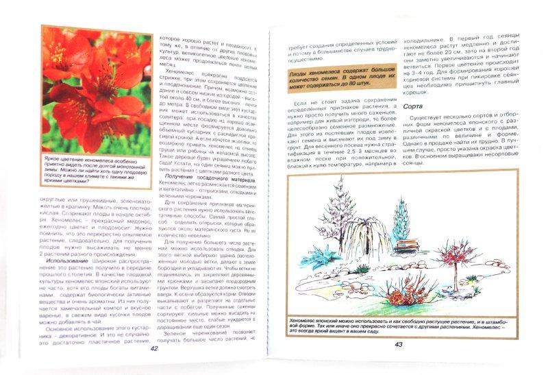 Иллюстрация 1 из 6 для Плодовые культуры в декоративном садоводстве. Иллюстрированный практикум - Калашникова, Калашникова, Малиновская | Лабиринт - книги. Источник: Лабиринт