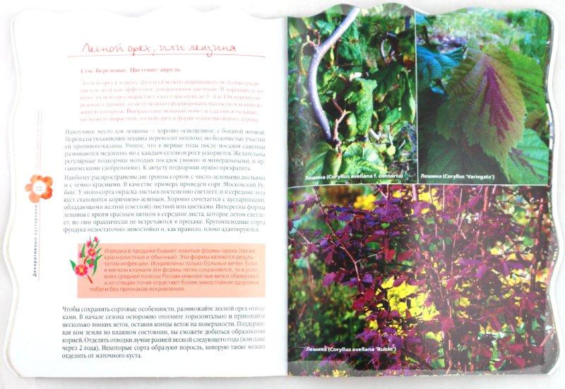 Иллюстрация 1 из 20 для Самые красивые декоративные кустарники в вашем саду - Владимир Чуб | Лабиринт - книги. Источник: Лабиринт