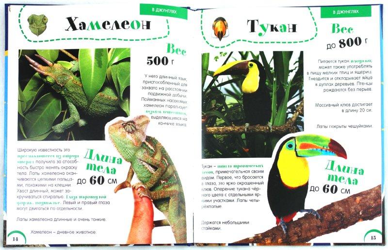 Иллюстрация 1 из 28 для Мои первые друзья. Животные - Черветто, Каневаро | Лабиринт - книги. Источник: Лабиринт