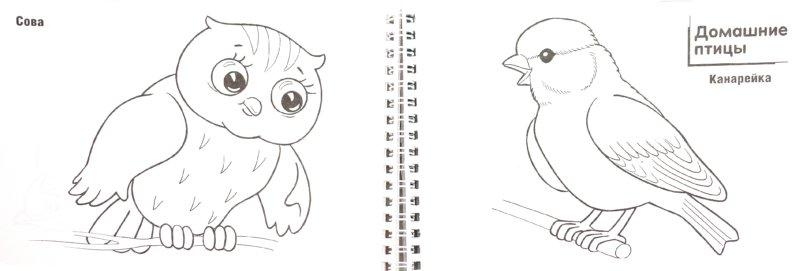 """Иллюстрация 1 из 10 для Раскраска """"Твои первые уроки"""" (06523)   Лабиринт - книги. Источник: Лабиринт"""