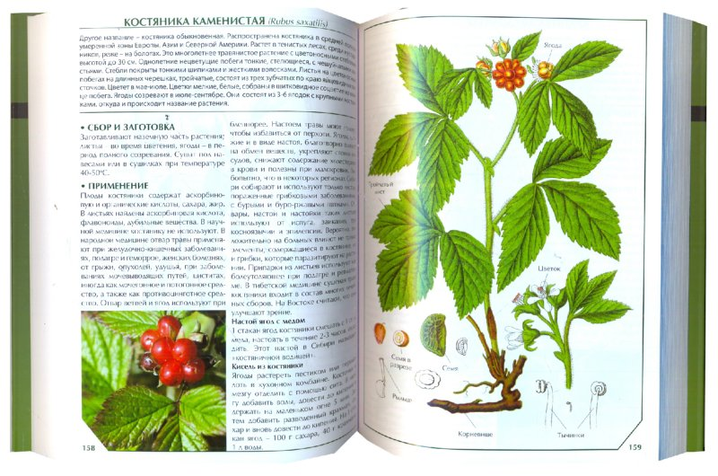 Иллюстрация 1 из 8 для Лекарственные растения   Лабиринт - книги. Источник: Лабиринт