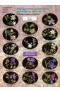 Определитель травянистых растений по цветкам. Раннецветущие растения